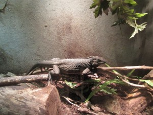 National Reptile Zoo City Square